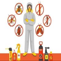 Termites Treatment Services – Pest Control Services Lucknow
